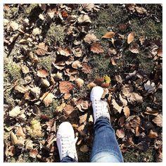 Un lunes sin prisas de frío y paseos. Un lunes diferente. Foto 323/365 #igersvalladolid #reto365 #365comodoos #autumn #monday #leaves by oh_carol