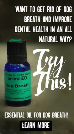 If your dog's mouth and teeth are healthy enough to try natural options, Dog Breath is a perfect addition to an oral health routine.  When Dog Breath is rubbed onto teeth and gums daily to twice a day, reduction in gingivitis and inflammation is greatly noticed - and breath often improves. I have tried this on my own gums and there is no unpleasant taste or sensation, it's sort or spearminty!