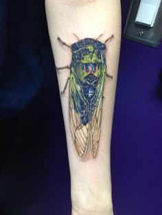Amy Shaw shared a photo of her new photo-realistic extremely large cicada tattoo, artist Dan Henk