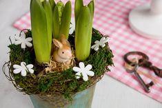 Nechce se vám utrácet za řezané květiny? Pořiďte si cibuloviny, protože na zahrádce se pak můžou dočkat dalšího života. Poradíme vám, jak cibulky krásně zakrýt věnečkem.