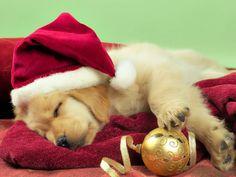 Christmas puppy pleaaassseee???:)