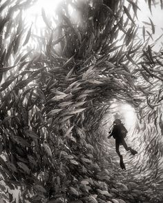 """""""Alice"""" A diver surrounded by silver jacks in Cabo Pulmo National Park Mexico. Daniela doing her first certification dives in Cabo Pulmo. She was fortunate to dive among one of the biggest silver jack swarms I ever seen. When I saw that she was swimming up I knew the jacks would surround her so I prepared for the shot --- This week on our Instagram World Press Photo Award winner Anuar Patjane Floriuk (@anuarpatjane) shares his work from above and below the surface of the earth. From the…"""