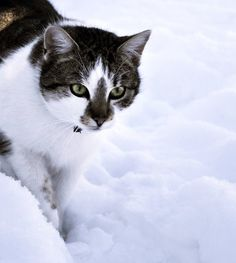 In snow. by Safiru.deviantart.com on @deviantART