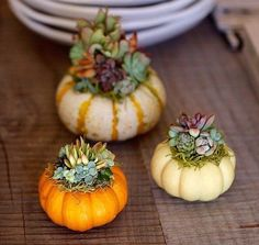 The French Tangerine: ~ october pinspiration