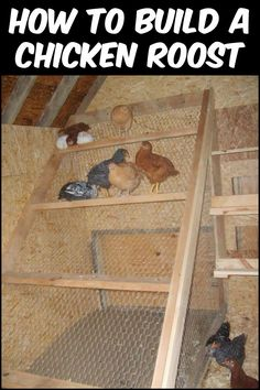 Learn How to Build a Good Chicken Roost