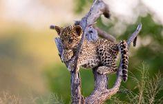 Botswana Safaris Okavango Delta deutsch | travel-friends.com :: Urlaub bei Auswanderern