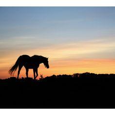 Brewster 'Horse Silhoutte' Wall Mural | Overstock.com Shopping - The Best Deals on Vinyl Wall Art