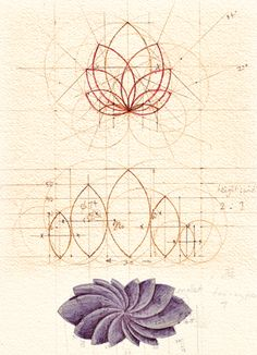 'Petals' geometrical design / Sacred Geometry <3