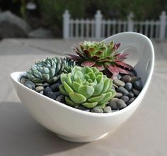 "White porcelain bowl with three simple succulents; a perfect centerpiece for any outdoor table or a beautiful embellishment for a window or patio. Pot size is approx. 7-3/4"" x 6"" by 4-1/2"" tall. Pleas"