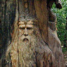bomen Tree carvings