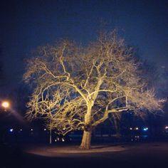 Roots. Tree in Cismigiu Park
