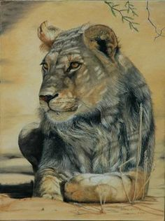 Young Kalahari Lion Painting in oils by Wildlife Artist Noel Smith