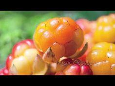 Arctic Cloudberry | I Am Visi
