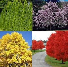 Need a tree that grows in a hurry? Check out these fast growing trees.