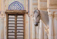Marwari_mare.jpg - Marwari mare Soma posing in beautiful haveli in Mandawa, India