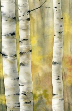 Kori Fluckiger - Aspen tree trunks