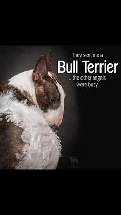 They sent me a bull terrier - the other angels were busy.