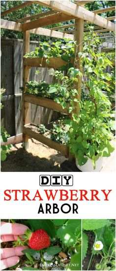 Make a Garden Arbor Planter Perfect for Strawberries If you're adding an arbor or sunshade, why not add some built-in planters for strawberries or flowers? It looks great and adds vertical growing space to your garden. Strawberry Planters, Strawberry Garden, Garden Arbor, Garden Landscaping, Garden Beds, Container Gardening, Gardening Tips, Vegetable Gardening, Greenhouse Gardening
