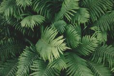 green, leaves, plants, nature