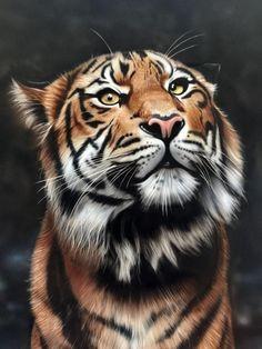 Tiger painted in our advanced wildlife airbrush course Tiger Painting, Painting Studio, Airbrush Art, Custom Paint, Art School, Wildlife, Gallery, Artwork, Animals