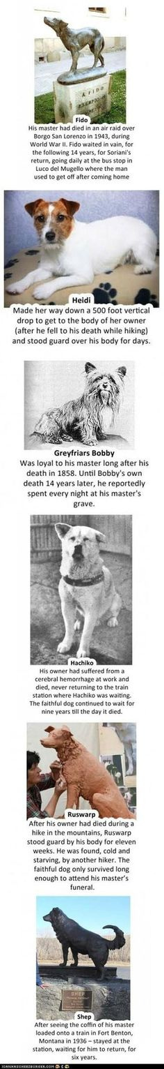 These stories break my heart, but make me so thankful to have dogs. They have much better traits than humans, loyalty being one of them.