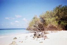 Madivaru, Maldives -- Vivitar Mariner -- Lomo X-Pro Chrome 100 #vivitar #mariner #camera #lomo #lomography #xpro #chrome #film #analog #analogue #maldives #madivaru #grain #grainy #grains #indian #ocean #summer #sun #sunny #sunshine #hot #heat #warm #bathe #sunbathe #bath #sea #ocean #water #waves #fish #fishes #coral #corals #sand #white #snorkel #snorkeling #island #islands #excursion #tour #vacation #honeymoon #weekend