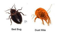 Organic Bedding and Mattress Store Rid Of Bed Bugs, Do You Know What, Dust Mites, Clean House, Cleaning, Zen Bedrooms, Health, Blog, Knowledge