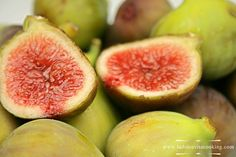 The fig: cultivated by man since ancient times, and grown throughout the temperate world, both for its fruit and as an ornamental plant.