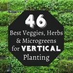 46 Best Veggies, Herbs & Microgreens for Vertical Planting
