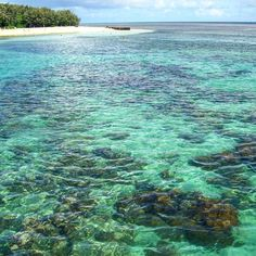 Great Barrier Reef: summer 2010  #greatbarrierreef #grandebarrieracorallina #australia #greenisland #sea #summer #mare #estate #island #isola #beach #spiaggia #relax by massimo.macioce http://ift.tt/1UokkV2