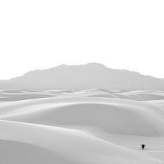 "It is really that white. ""Lone Yucca"", White Sands National Monument, New Mexico. Photo by Drew Medlin"