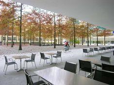 Novartis Headquarters, Forum | PWP Landscape Architecture