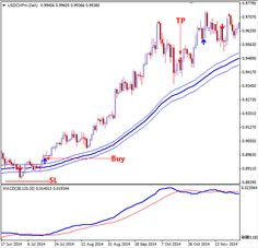 Daily forex trading idea and special education