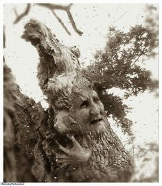 The Montana Tree Lady 1872 Pictures