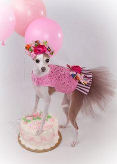 Birthday Sprinkles Tutu Harness Dog Dress by KOCouture on Etsy, $250.00