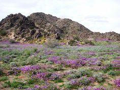 The Desert of Yuma, Arizona - Februrary 2013    Google Image Result for http://pics4.city-data.com/cpicc/cfiles31642.jpg