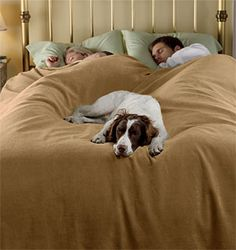 Perfect Dog Proof Bedding / Reversible Dog Proof Coverlet And Matching Shams     Orvis UK | Home Decor | Pinterest | Bedrooms