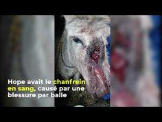 #HopeEtVanille : un sauvetage exceptionnel - YouTube Fondation Brigitte Bardot, Horses, Animals, Bullet, Animales, Animaux, Animal, Animais, Horse
