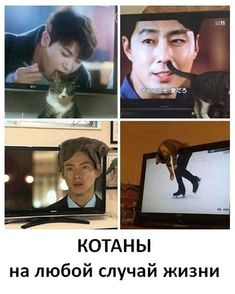 Don't leave your cat alone while the TV is open. Funny Science Jokes, Funny Fun Facts, Funny Animal Jokes, Some Funny Jokes, Really Funny Memes, Stupid Funny Memes, Funny Relatable Memes, Haha Funny, Funny Images