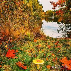 --------------------------- #giantific #autumn #fall #mushroom #leaves #winter #water #lake #forrest #woods #colourful #colors #reflection #nature #europe #dutch #nederland #holland #traveling #travelling#travel #traveltheworld#travelblogger #traveljunkie#gopro#goprooftheday #goprohero #sky_sultans#reizen #landscape