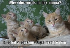 Funny cats with captions kittens cute animals 24 ideas for 2019 Funny Cat Captions, Animal Captions, Funny Pictures With Captions, Funny Cat Memes, Funny Cat Videos, Funny Animal Pictures, Funny Cats, Funny Animals, Cute Animals