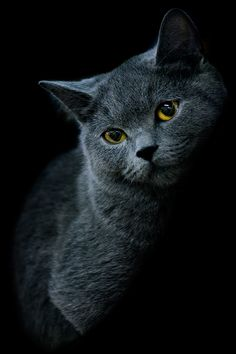 photo: * | photographer: Tanya Roginsky | WWW.PHOTODOM.COM