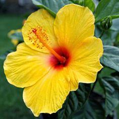 Link: http://m.kappboom.com/gallery/l_alt?l=http%3A%2F%2Flh4.googleusercontent.com%2F-U3by7GqidnE%2FVL-ceOu4QDI%2FAAAAAAAABVw%2FkNfc_6nkUSg%2Fs1136%2Faloha_flower-pua-aloalo-dj-florek.jpg&share=pinterest.shareextension