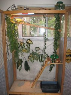 Iguanas - Post pictures of your cyclura cages