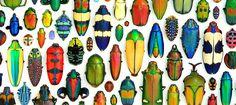 Arte com insetos