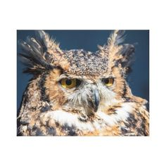 20x16 Great Horned Owl Portrait Canvas Print - personalize gift idea special custom diy or cyo