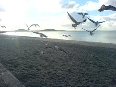 Mission Bay - Auckland