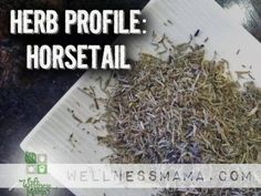 Herb Profile-Horsetail Shavegrass Uses and Benefits