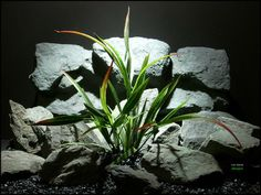 plastic aquarium plants: arrowhead grass pap127 from ron beck designs. by ronbeckdesigns on Etsy. #aquarium #reptile #decor #plants #ron_beck_designs #aquascaping #artificial #plastic #snake #succulent