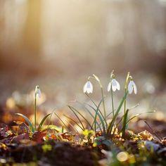 """Germogliare in sintonia con la Primavera:  Ogni stagione è caratterizzata da un'azione, stiamo abbandonando l'Inverno e l'azione di """"conservare, accumulare"""" per aprirci a una rinnovata energia, germogliare in sintonia con la Primavera, in cui il nostro pacchetto energetico si allinea in modo naturale ai fiori che sbocciano, alle gemme che si schiudono, ma siamo …"""